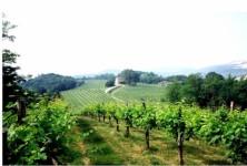 vinyard_picture1