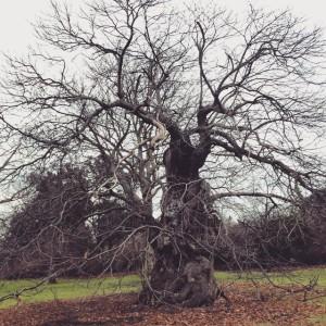 6heads treepoeryofchange