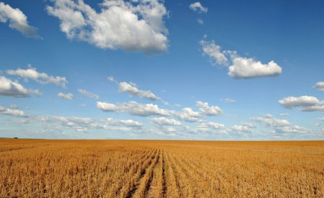 Dry soy plantation over a blue sky with clouds, Barreiras, Brazil © Adriano Gambarini / WWF-Brazil