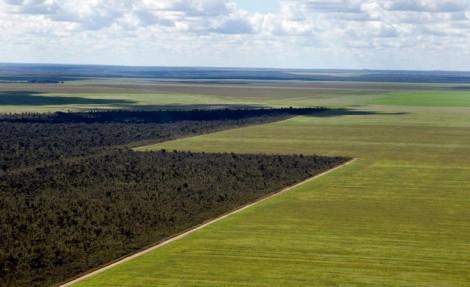 Aerial view of the Cerrado and soy monoculture © Adriano Gambarini / WWF-Brazil