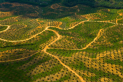 Aerial view of palm oil plantation on deforested land, Sabah, Borneo, Malaysia     2007
